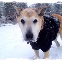 Missy's doggie